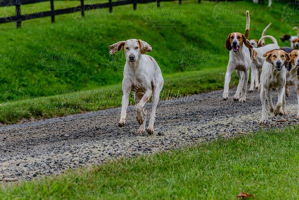 pfh hounds-90