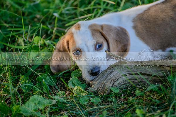 PFH Puppies-82