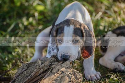 PFH Puppies-117