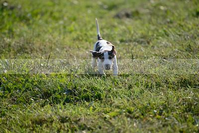 PFH Puppies-45