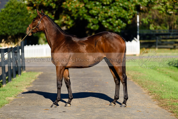 Yearling Filly by Uncle Mo-Silver Heart