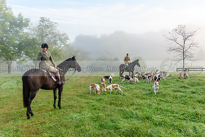 Piedmont Fox Hounds @ Buttonwood. Early Morning light with the morning fog.