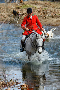 Huntsman Richard Roberts crossing Goose Creek with the Middleburg Hunt at the Middleburg Christmas Parade.