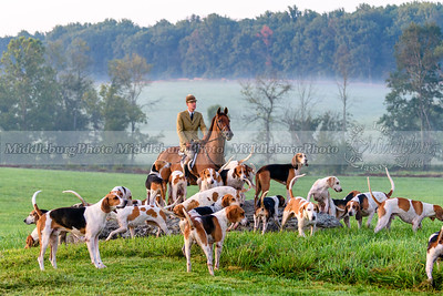 Piedmont Fox Hounds @ Old Welbourne