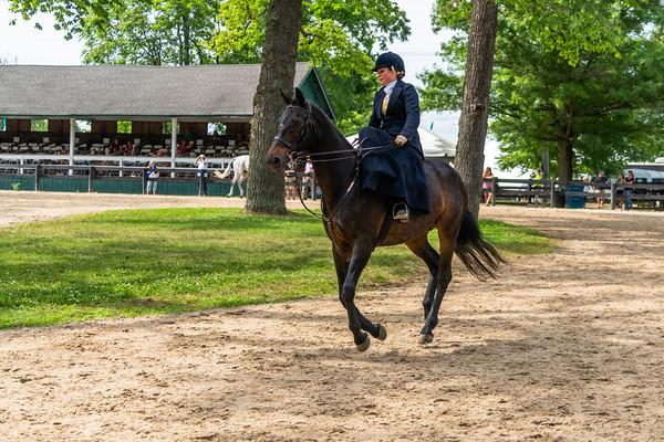 Horse Show-650