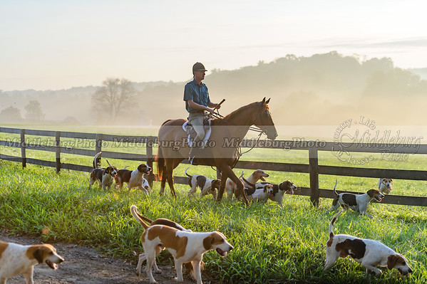 Piedmont Fox Hounds-August 2015