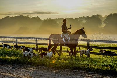 Piedmont Fox Hounds-August 2015