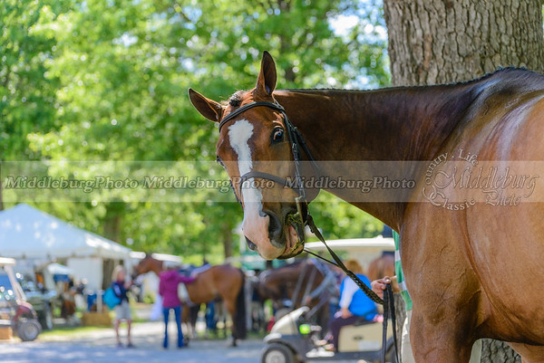 upperville wednesday-6