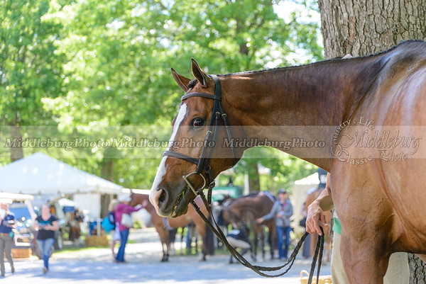 upperville wednesday-3