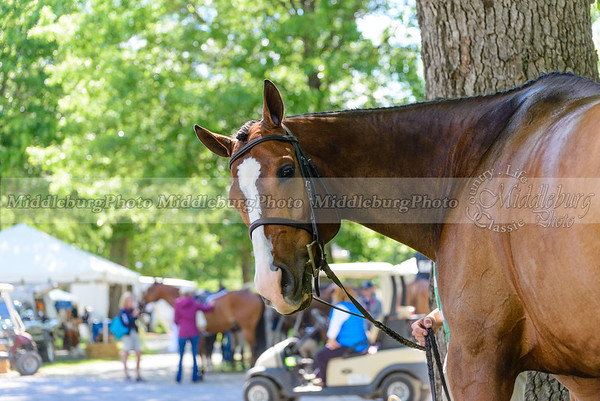 upperville wednesday-5