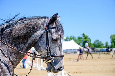 HorseShowkm-48