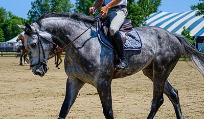 HorseShowkm-43