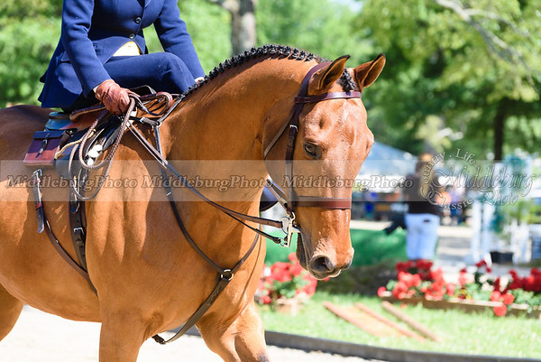 Upperville Saturday-105-2
