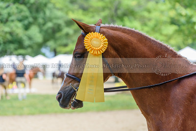 Upperville Saturday-842