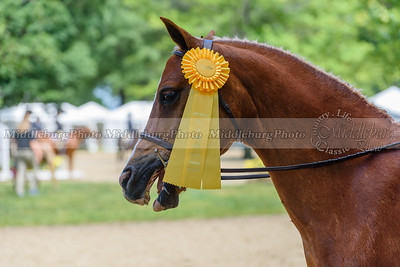 Upperville Saturday-841