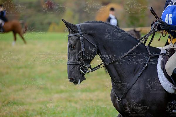 Virginia Field Hunter Champpioniships-20