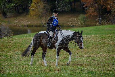 Virginia Field Hunter Champpioniships-14