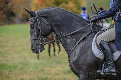 Virginia Field Hunter Champpioniships-22