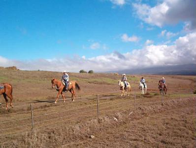 Horseback Riding on Hawaii