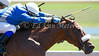 Cozy Sunday and Edgar Paucar in the 2nd race at Belterra Park. 07.04.2014