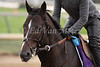 Big Drama works in preparation for The Breeders' Cup at Churchill Downs. 11.03.2010.<br /> photo Ed Van Meter