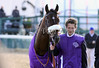 Biondetti walks to the paddock for The Breeders' Cup Juvenile at Churchill Downs. 11.06.2010.<br /> photo Ed Van Meter