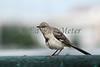 Bird at Churchill Downs. 06.18.2011