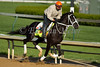 Black Onyx, Kentucky Derby contender at Churchill Downs. 04.26.2013