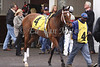 Timeless Fashion in the Turfway Park paddock prior to winning The Tejano Run Stakes. 03.13.2010