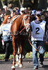 Bridgetown in the paddock prior to winning The Woodford (gr.III) at Keeneland Race Course. 10.06.2012