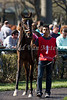Amen Kitten in the paddock prior to running in The Transylvania (gr.III) at Keeneland Race Course. 04.05.2013