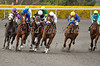 Valanis (M. Straight, rail), Russkiy Lemon (A. Castanon, yellow cap), Grenoble (C. Nakatani, white shadow roll), Alydorable (R. Napravnik, white cap), Kipling's Joy (B. Hernandez, blue cap), Kimberly Jean (C. Lanerie, purple cap) enter the top of the stretch in the 4th race at Keeneland Race Course. 04.12.2013