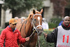 Cacto Canto makes his first start at Keeneland. 10.15.2009