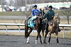 Black Onyx and Joe Bravo in the post parade of The Horseshoe Casino Cincinnati Spiral Stakes (grIII) at Turfway Park. 03.23.2013