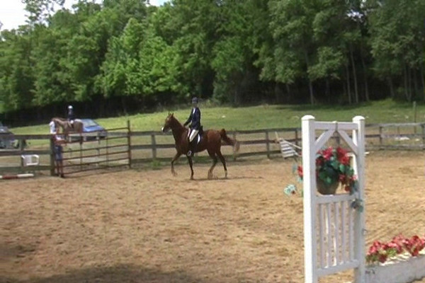 Oliviero Miller's Farms Horse Show