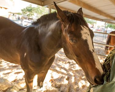 Horses Help 1 November 2014 November 01 2014  003