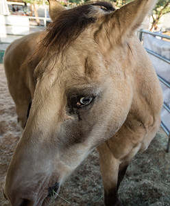 Horses Help 1 November 2014 November 01 2014  002