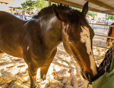 Horses Help 1 November 2014 November 01 2014  004