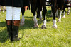 Winterthur Point to Point Carriage Horses and Groom's Legs