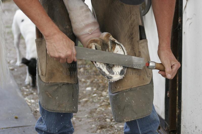 Horse Pedicure by blacksmith Dean Pierson, Wellington, FL