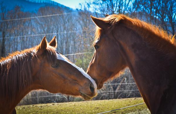 Horsemanship Clinic w/Emily Shields