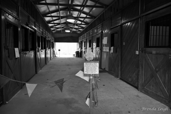TROT  Barn Time on a Rainy Day