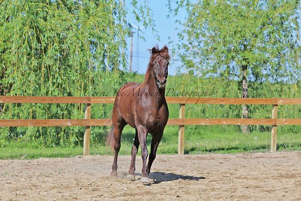 Horses - JR & Buddy