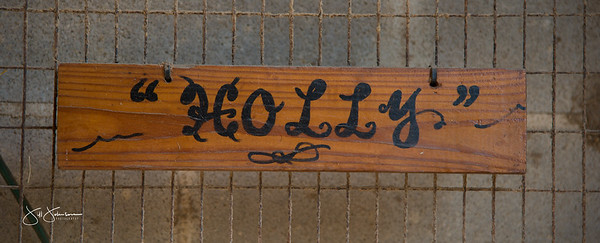 holly-6931