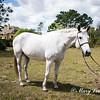 horsesofwedgfield-0925