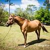 horsesofwedgfield-0787
