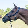 horsesofwedgfield-2234