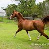 horsesofwedgefield-2088