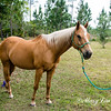 horsesofwedgfield-1195