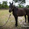 horsesofwedgfield-1000